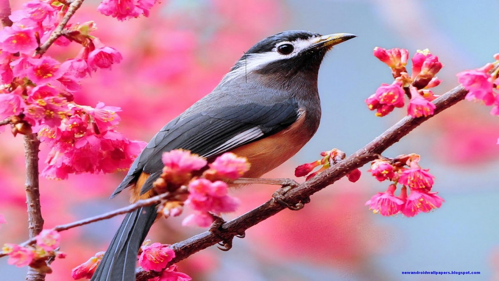 Beautiful Birds In Cool Area Hd Wallpapers Free Download