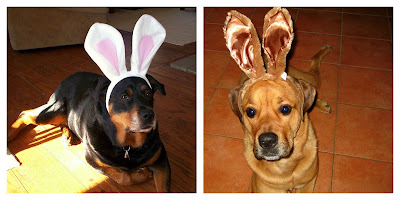 bunny dog costume - turtlesandtails.blogspot.com