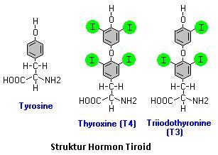 mekanisme kerja hormon steroid pada tumbuhan