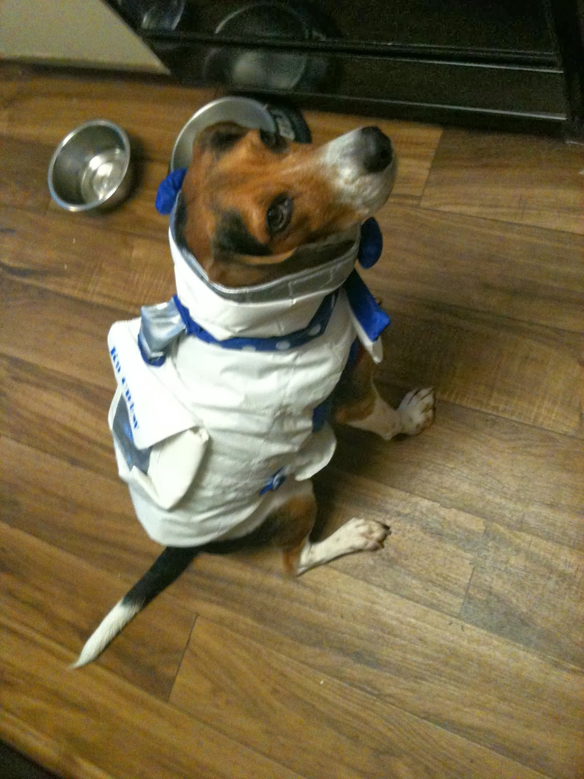 Life With Beagle: Need a Halloween costume for your pet? Check out ...