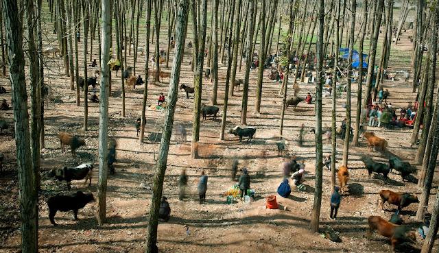 World Press Photo Contest 2015, Vida cotidiana, Daily Life, The Bull Market, Cai Sheng Xiang