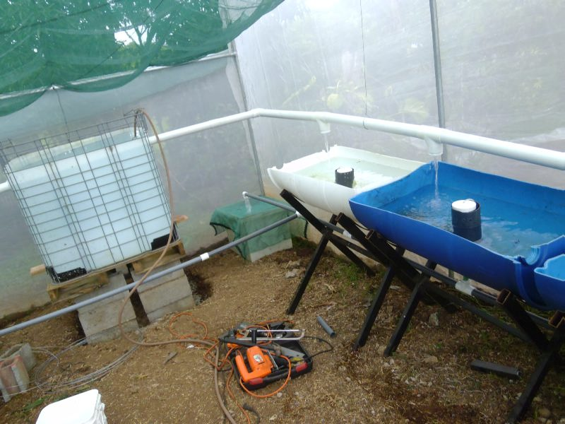 Acuapon a jardines agroecologicos y permacultura en for Tanques para peces