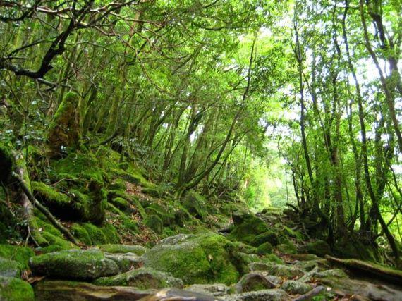 Zanimljivosti iz  geografije - Page 2 08-beautiful-forest