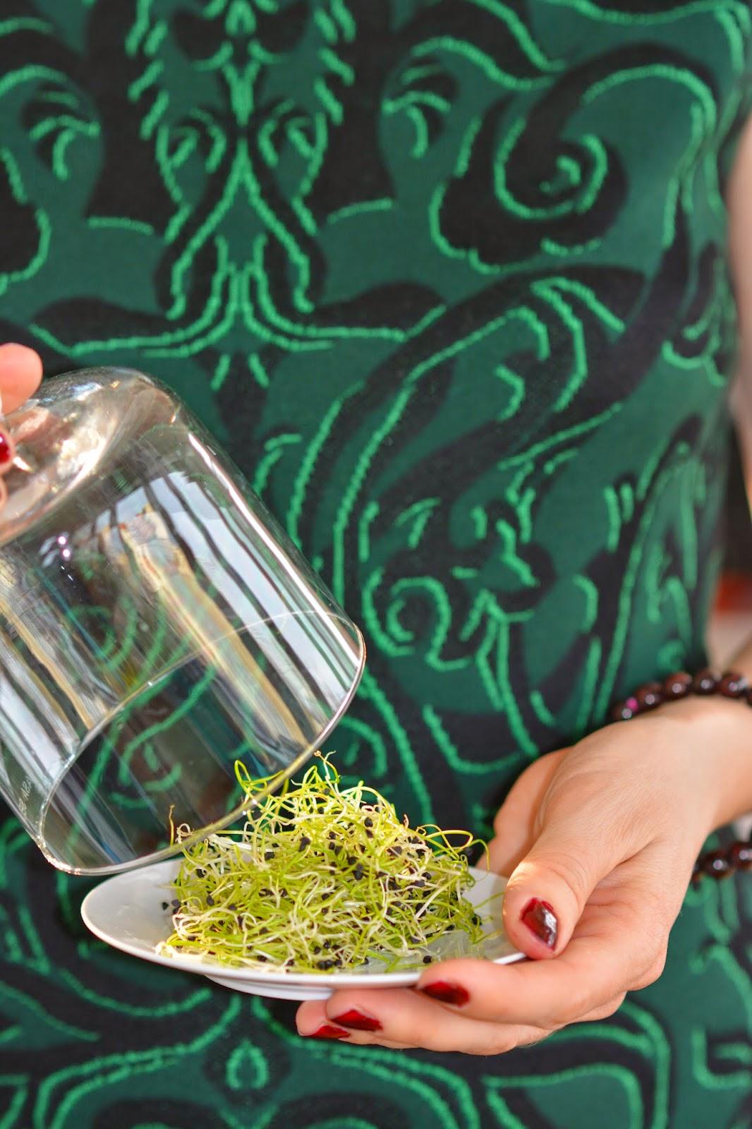 malachitschatulle zwiebel die sch nheit und vielf ltigkeit einer gew hnlichen pflanze. Black Bedroom Furniture Sets. Home Design Ideas