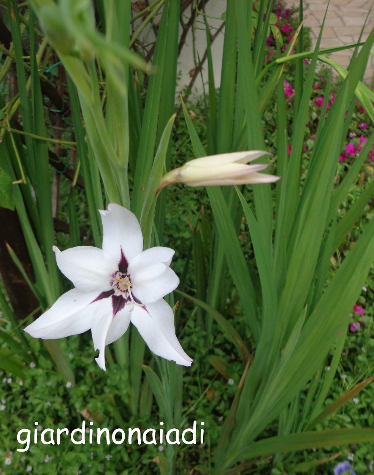 Il giardino delle naiadi agosto 2013 - Terriccio fertile ...