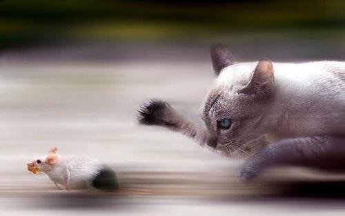 Cara menangkap tikus adalah dengan menggunakan kucing. Tau kan.. Kucing beraksi tangkas menangkap tikus jahat a.k.a pencuri dan menjadi samseng di dapur kami!