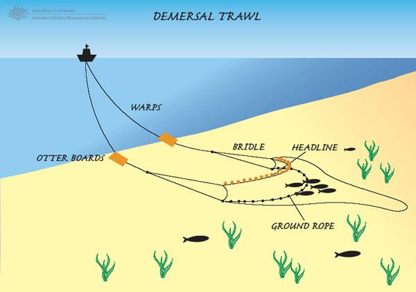 Mari Berbagi Dan Berarti Selektivitas Alat Tangkap Trawl