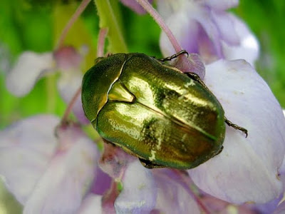 god gifted colourful insects photo collection