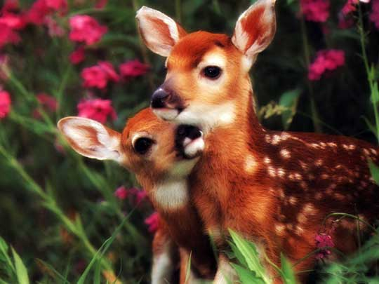 Images of wild baby animals - photo#5
