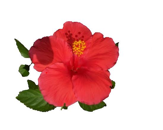 Que significa soñar con flor