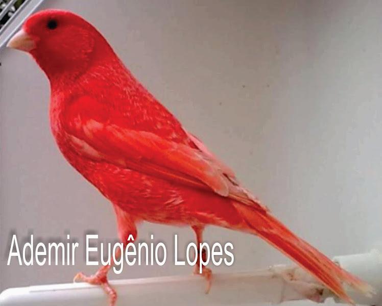 Ademir Eugênio Lopes