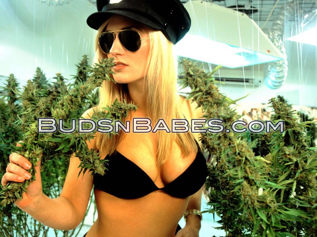 http://2.bp.blogspot.com/-eoeqzGRx2Gw/Teo-o9CytpI/AAAAAAAAAWY/eQKpt0KLNRs/s1600/wallpaper--weed-babes-marijuana-235754_1024_768.jpg