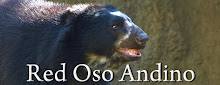 Red Oso Andino