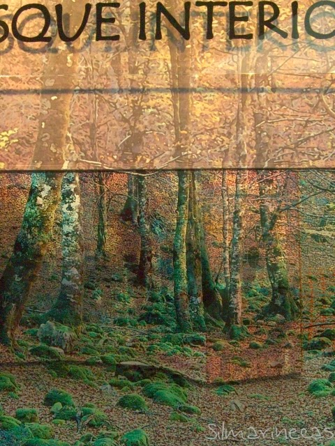 Exposición el bosque interior - atapuerca