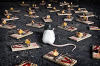 perangkap tikus untuk menangkap tikus