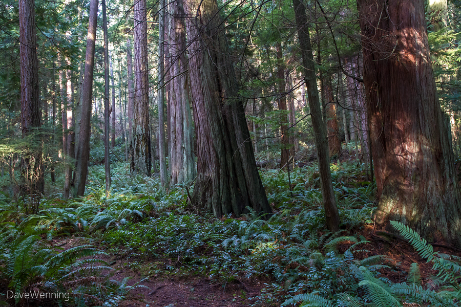 pacific northwest forest - photo #16