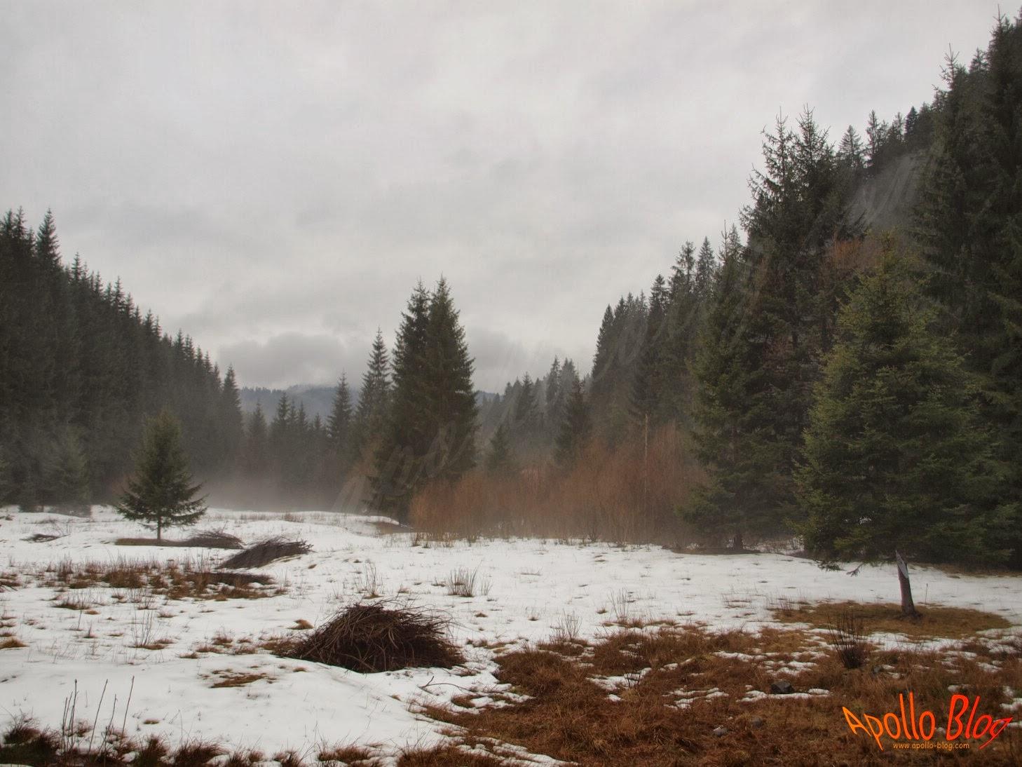 Padure in ceata
