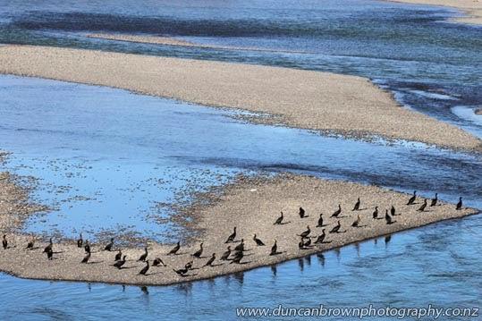 Shags on shingle, Tukituki River, Haumoana photograph