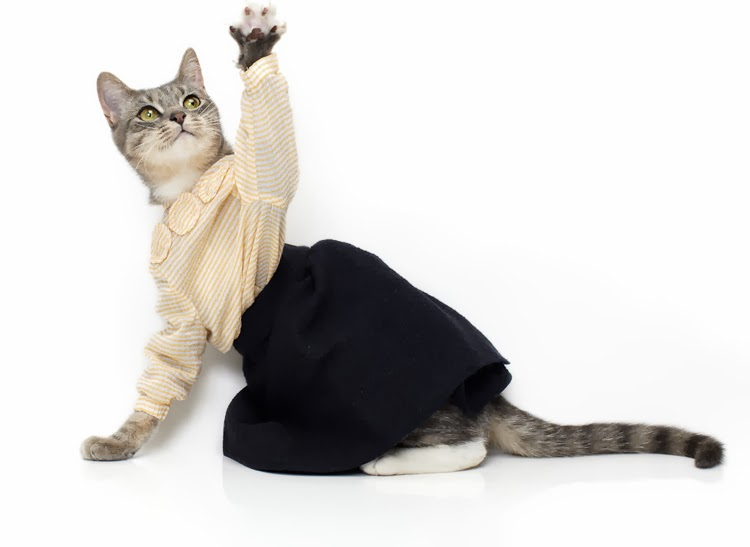 Animals wearing clothes - photo#13