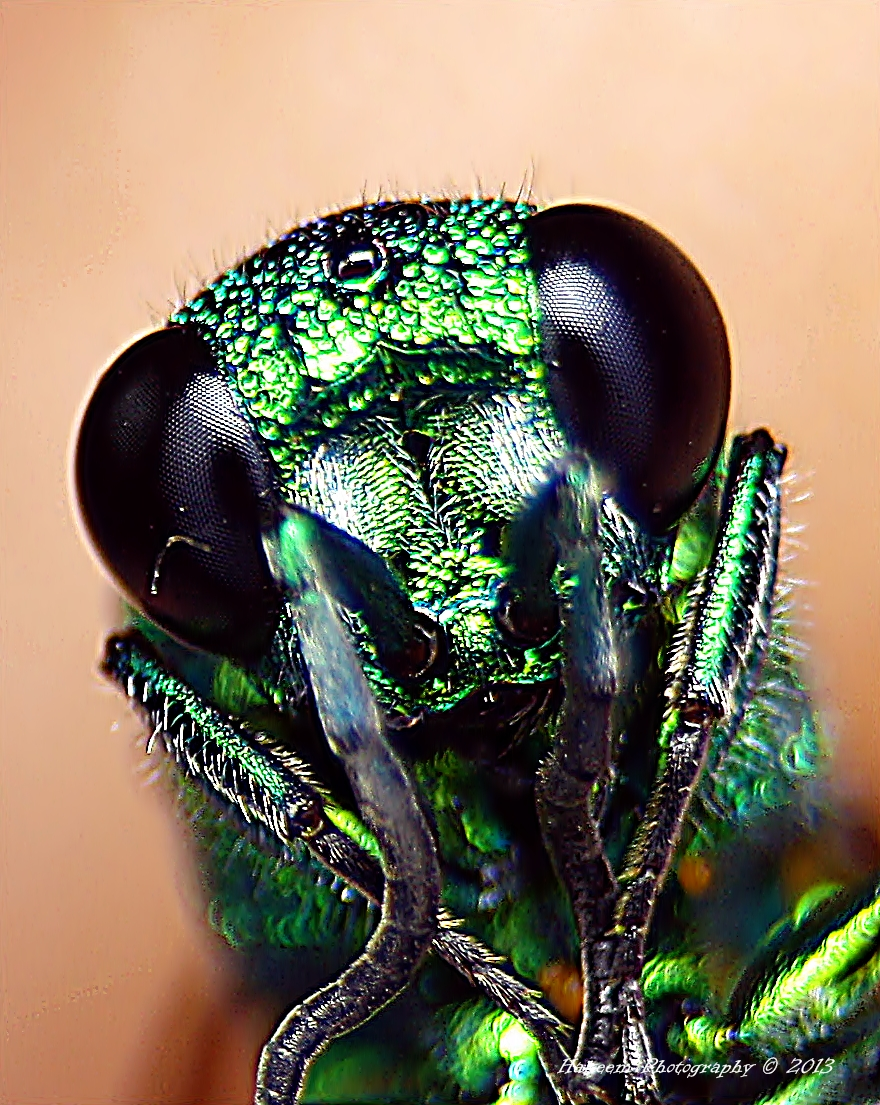 Metallic Green Wasp 3