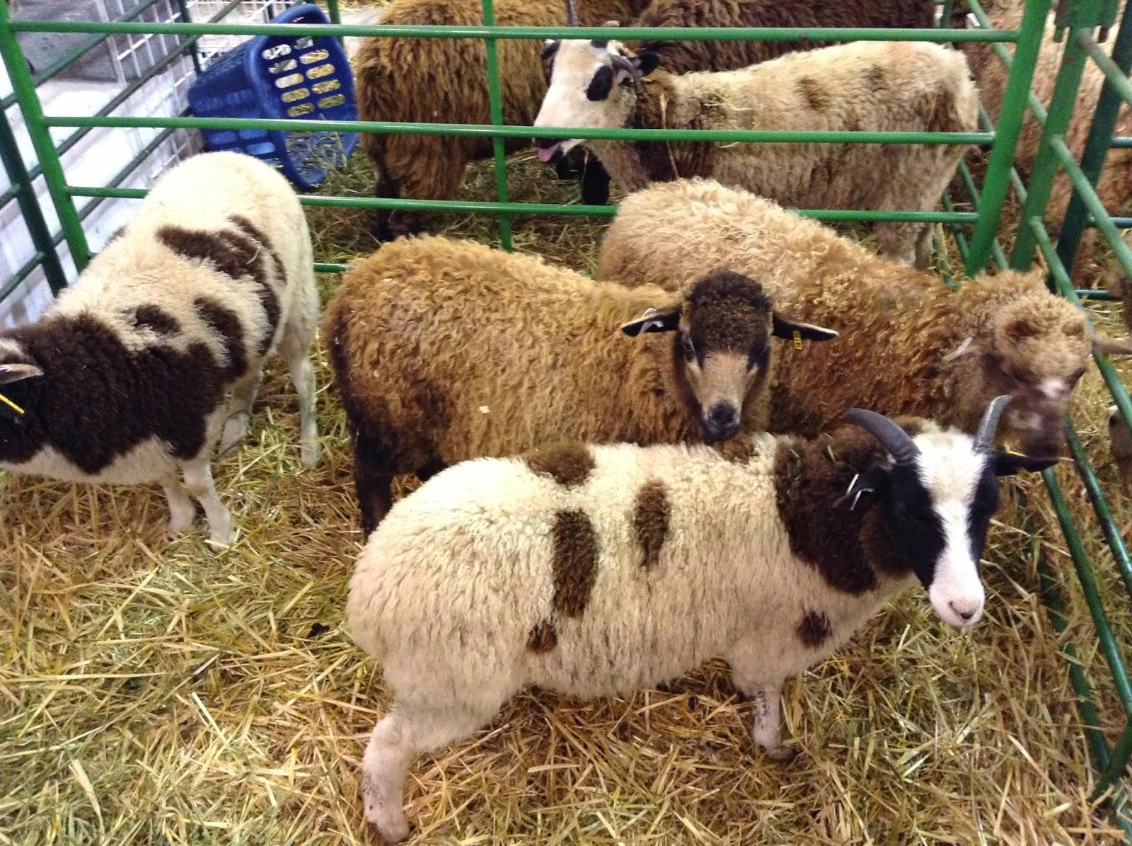 Knitting for Peace: Black Sheep Gathering