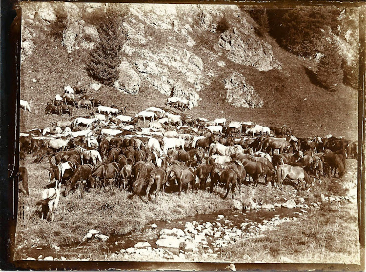 Hunting Party Photographs in Kashmir - 1903