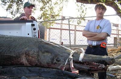 Largest Alligator Gar Ever Caught - World Record Alligator Gar