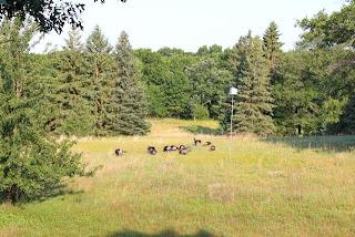photo of the backyard of where I live