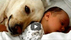 Cães e Gatos conhecem bebês pela primeira vez
