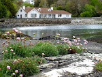 Botanik-Kurse im subtropischen Klima Südwest-Irlands