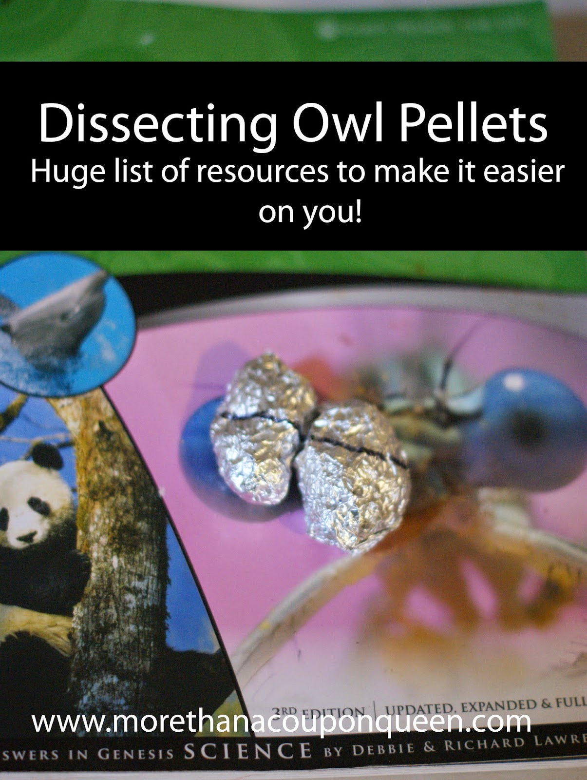 Dissecting Owl Pellets - Huge List of resources to make it easier on you - Geeky Educational Link Up Week 38