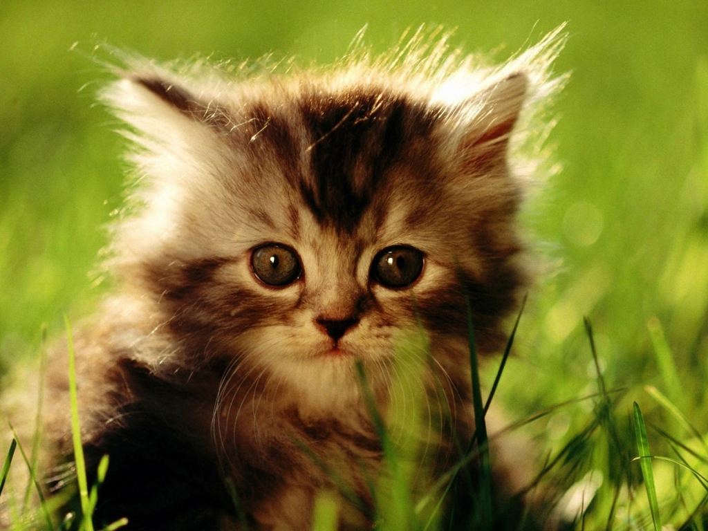 Animal Wallpapers Blog Cat Wallpapers