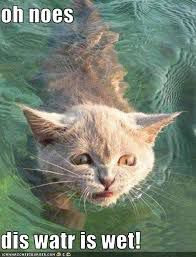 funny cat in water boom