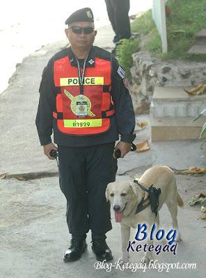 Anjing polis membawa pistol di Thailand
