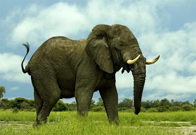 top 10 noisiest animals on earth