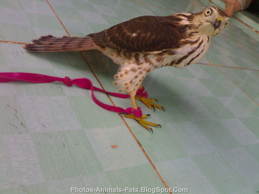 http://2.bp.blogspot.com/-eqX8132oNYc/TrWDTCY2FJI/AAAAAAAACMU/puZwYghVIik/s1600/Pet%2Bbirds%2B2011.jpg