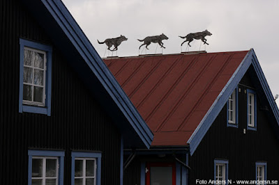 varg, vargar, på taket, ingen varg på taket, ingen ko på taket
