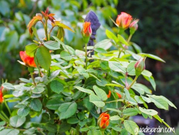 Clasificaci n de las plantas seg n su tama o guia de for Arbustos de jardin nombres