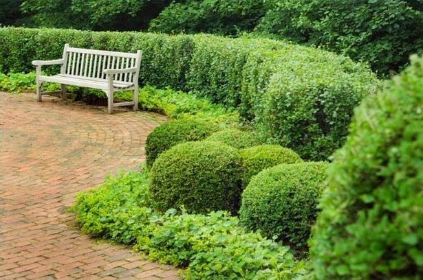 il mondo in un giardino: sempreverdi per siepi - Piante Da Giardino Sempreverdi A Cespuglio