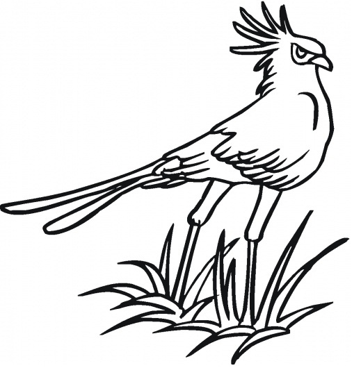Secretary Bird Coloring Page widescreen