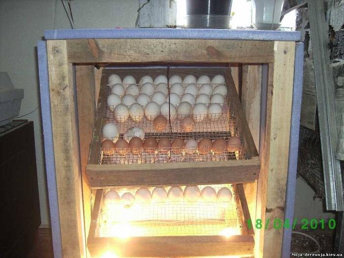 Инкубаторы для куриных яиц сделать своими руками 133