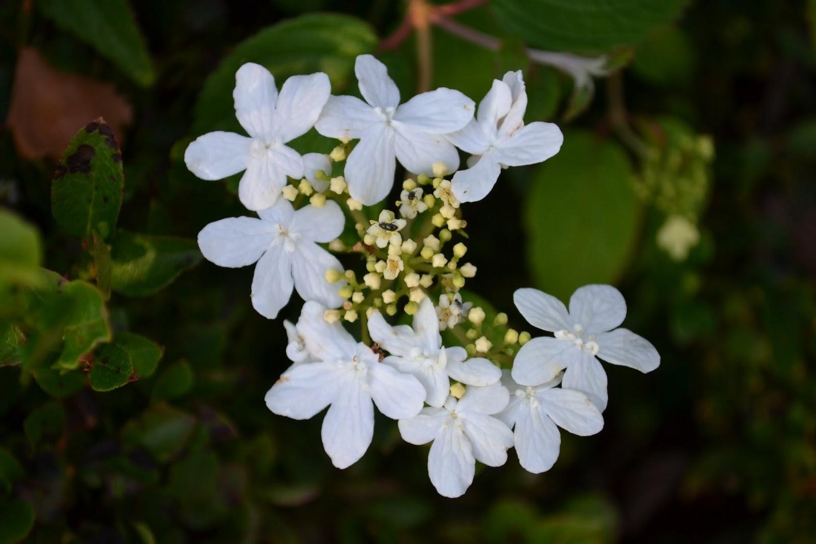Blomsterbo: ett olvon för varje plats