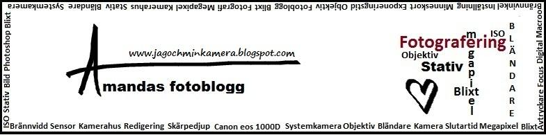 Amandas fotoblogg