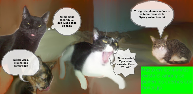 Discusión entre mis gatos.