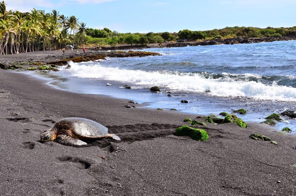Punaluu Beach – Black Sand Beach