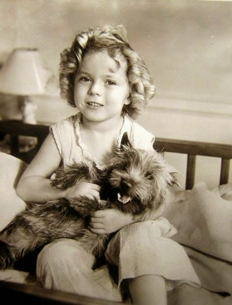 See more westies http://cutepuppyanddog.blogspot.com/