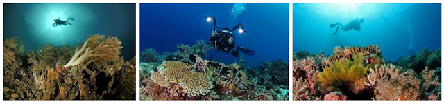 populer dengan keindahan lautnya yang berada di  Tempat Wisata Paling Hits Yang Wajib Di Kunjungi Diving - Wisata Bahari Halmahera Barat