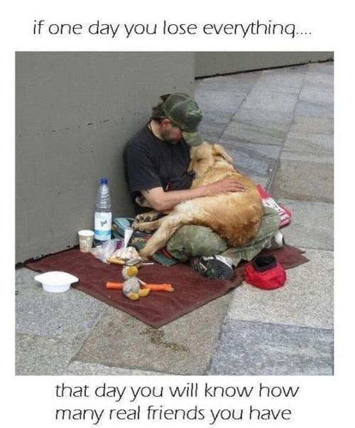 Image Result For A Dog Proof