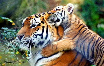 India Travel - Rajasthan Wildlife Tours