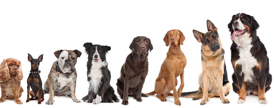 ¿Dónde se originaron los perros?